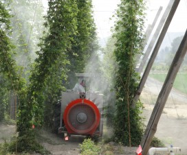 Reaching the tops of 16-20 foot hop plants on 7 by 7 foot spacing can be a tall order This Rears sprayer is doing a good job of it, but would air induction in the top positions help? Photo Credit – D. Groenendale, Washington.