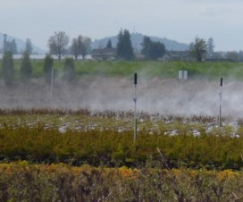 Adjustable ducts on cannon sprayers make them adaptable to many nursery crops, such as hoop house crops (left) and container crops (right). Note the change to the calibration formulae when calculating for one-sided airblast sprayers such as these. Photo Credit – M. Lanthier, British Columbia