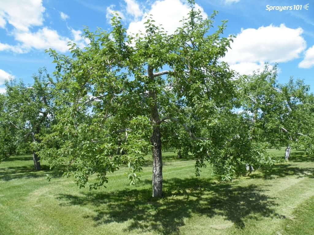 An orchardist taught me this trick: If you want to know if spray will penetrate a canopy, you should be able to see the trunk.
