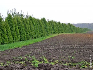 Consider planting windbreaks between your operation and sensitive downwind areas. Be aware that the windbreak should filter pesticide-laden air, not block it completely (~50 % porosity). Also be aware that there are potential impacts to nearby crop rows, such as creating shade as well as cool, still air conditions. Contact your local Nature Conservancy to discuss the right plants and management plan for you.