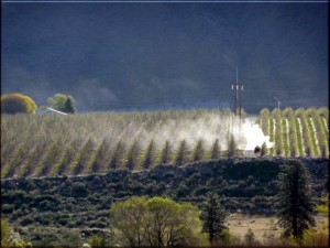It's not only field sprayers that drift. Photo Credit – G. Amos and D. Zamora, Washington State.