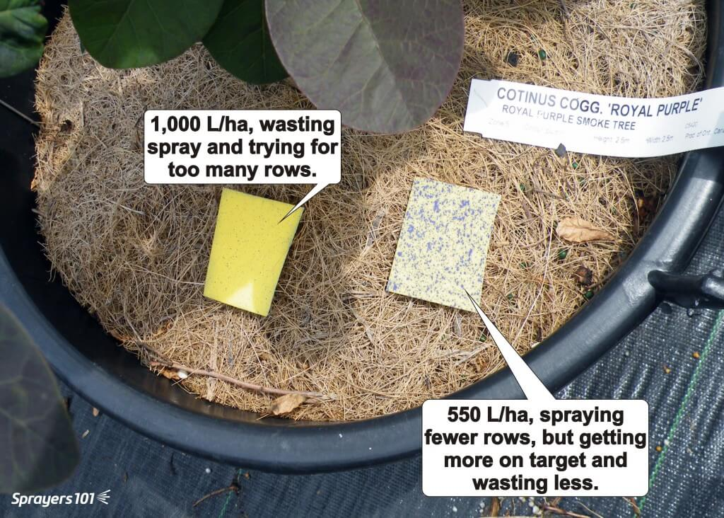 The results of a cannon sprayer calibration in a container crop nursery. The cannon sprayed 1,000 L/ha and tried to cover too many rows in a pass. The water-sensitive paper showed insufficient and inconsistent coverage. When it was recalibrated to spray 550 L/ha, but drive more rows, the water-sensitive paper showed considerable improvement.