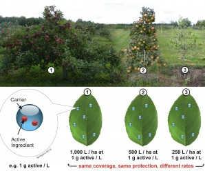 "The ultimate goal of CAS is to adapt the amount of active ingredient per unit ground area such that the amount of active ingredient per unit target area (usually the leaf area) remains constant for canopies of varying shape and density. When this is achieved with sufficient accuracy, the pesticide efficacy is maintained. These three plants are all significantly different in size. When calibration is appropriate to each plant, the foliar coverage ""experienced"" for each plant will be the same, in spite of differences in the amount of solution expelled per ground area."