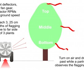 Attach 25 cm lengths of flagging tape on the far side of the plant canopy you wish to spray. If spraying in a light cross wind, choose the upwind target so the tapes are blowing into the canopy, not away from it. Do this at the top, middle and bottom of the canopy for three plants in a row.