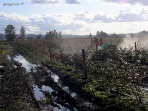 Spraying highbush blueberry in British Columbia just after a rain. Not ideal, but sometimes the window for application is very small. It's not the ideal situation, but one strategy for spraying a protectant fungicide on wet leaves is to concentrate the tank mix and use less spray per hectare. The fewer, and more concentrated, spray droplets will dilute in the water already on the leaves and the possibility of run-off is reduced. This is a stop-gap measure, only. The spray will not dry or distribute as it was intended and this strategy will require an additional full-rate application as soon as the weather improves, as long as the label permits. It is often said there is no such thing as a wasted fungicide application.
