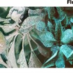 Kaolin clay and fluorescent dies sprayed into fruit canopies give a lot of information about sprayer coverage, but are relatively inconvenient compared to water-sensitive paper.