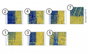 Water-sensitive papers corresponding to positions in Figure 2. Cards were folded around the stems to face each alley (Cards 1-6) and around the top leaf for surface and underleaf coverage (Card 7). There are some drenches, but no misses.