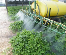 Spraying water in a 4 year-old garden
