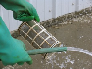 Cleaning a strainer - image courtesy of M. Lanthier.