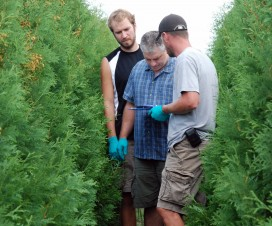 Water sensitive paper in cedar nursery