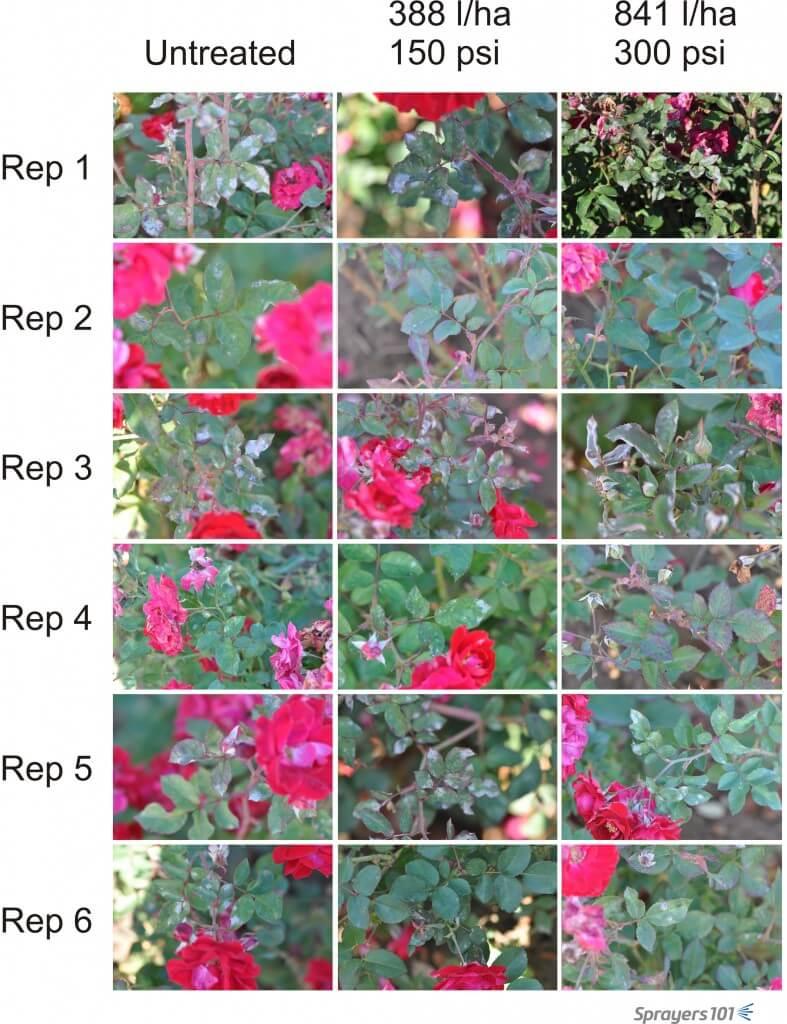 Visual record of randomly selected roses following treatment.