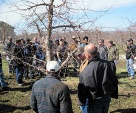 Explaining how to place water-sensitive paper and ribbons in an apple tree