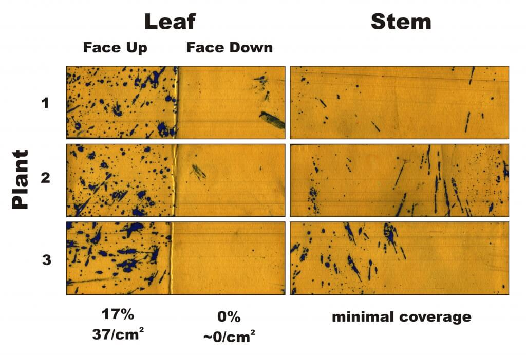 Figure 1 - Water-sensitive papers from three plants sprayed in Condition 1. Percent coverage and droplet density are calculated for the leaves, and a visual inspection is made of the stems.