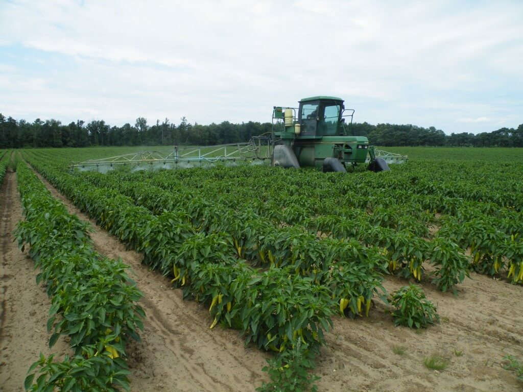 Spraying with drop-arms in mid-August.