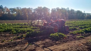 Trailed horizontal boom in strawberry